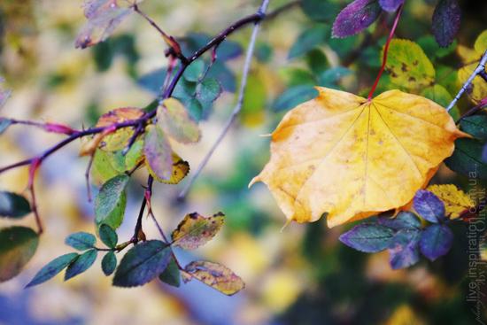 15.10.2013_autumn_x100s_1