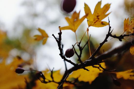 15.10.2013_autumn_x100s_10