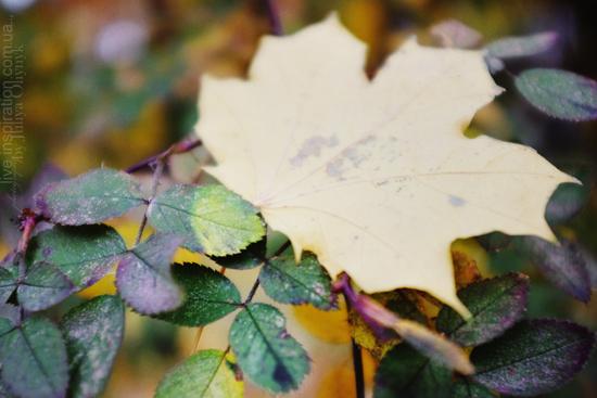 15.10.2013_autumn_x100s_2