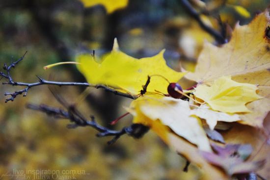 15.10.2013_autumn_x100s_3