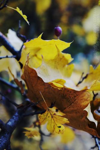 15.10.2013_autumn_x100s_4