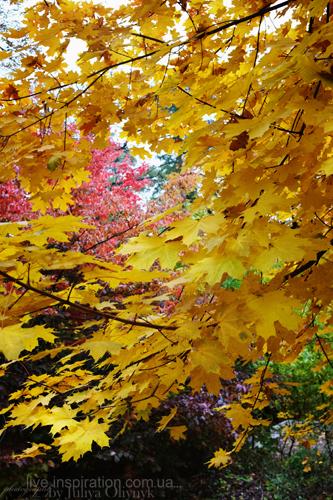 15.10.2013_autumn_x100s_5