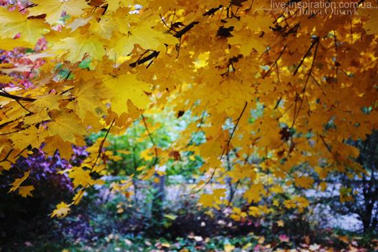 15.10.2013_autumn_x100s_6