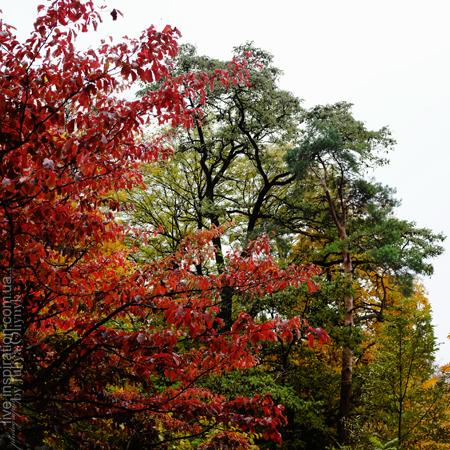 15.10.2013_autumn_x100s_7