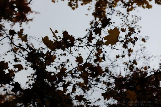 15.10.2013_autumn_x100s_8
