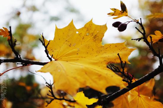15.10.2013_autumn_x100s_9