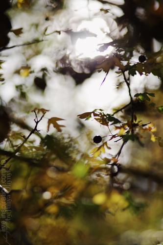 20.10.2013_park_pobedy_16