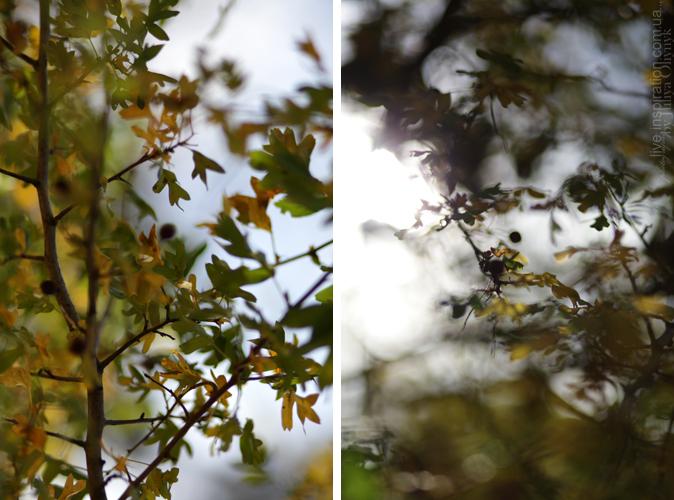 20.10.2013_park_pobedy_17