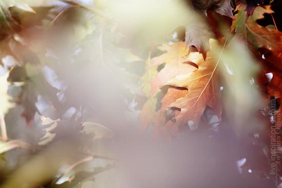 20.10.2013_park_pobedy_2