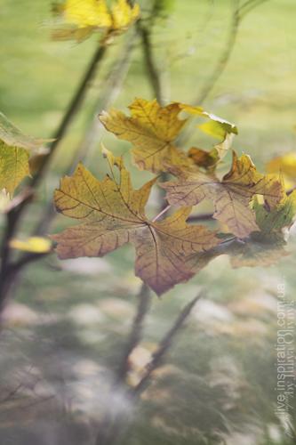 20.10.2013_park_pobedy_4