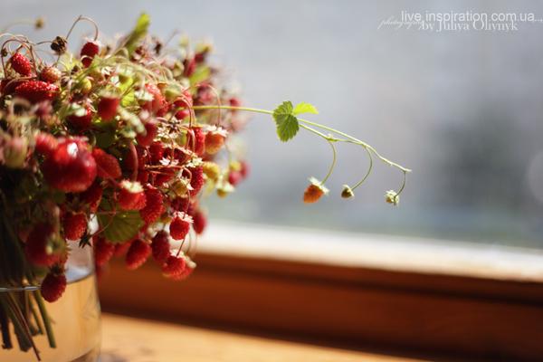 21.06.2014_strawberries_morning_4