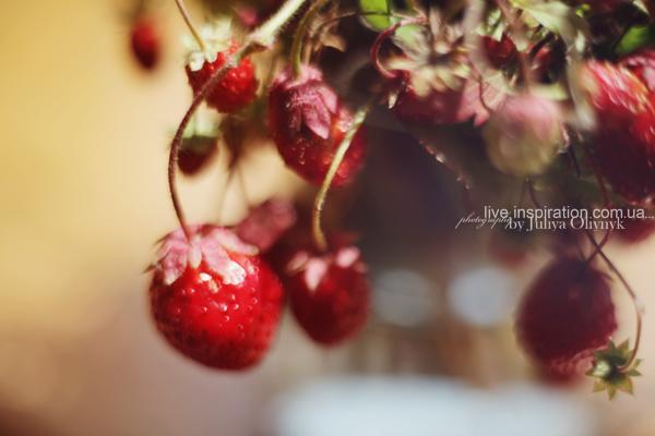 21.06.2014_strawberries_morning_6